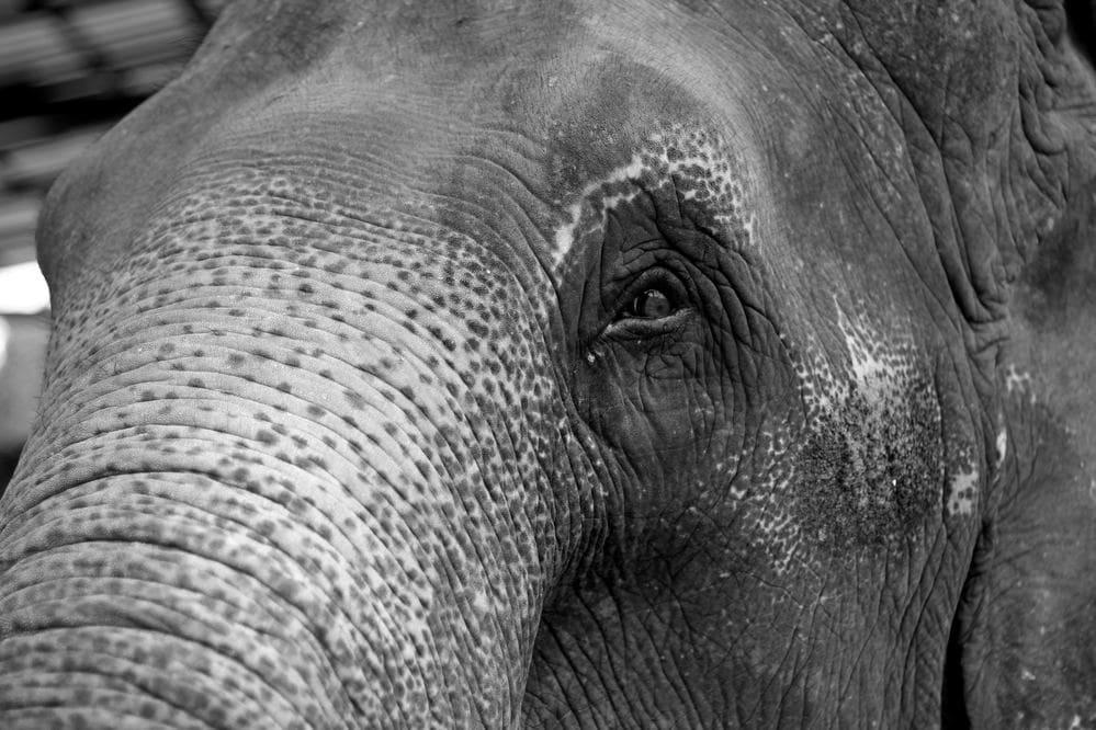 Der angekettete Elefant