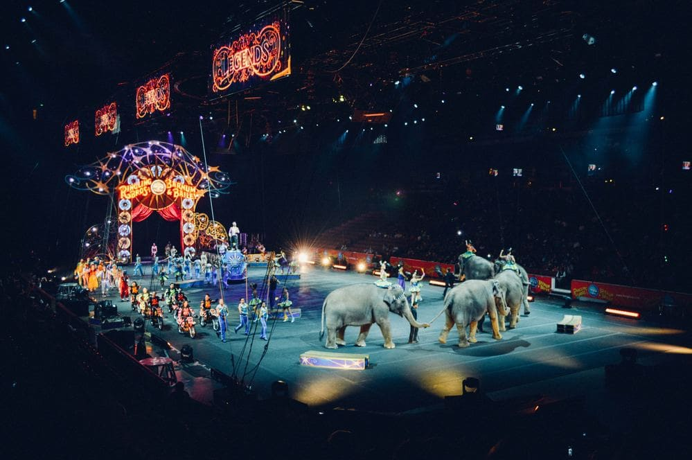 Elefant im Zirkus und Glaubenssätze